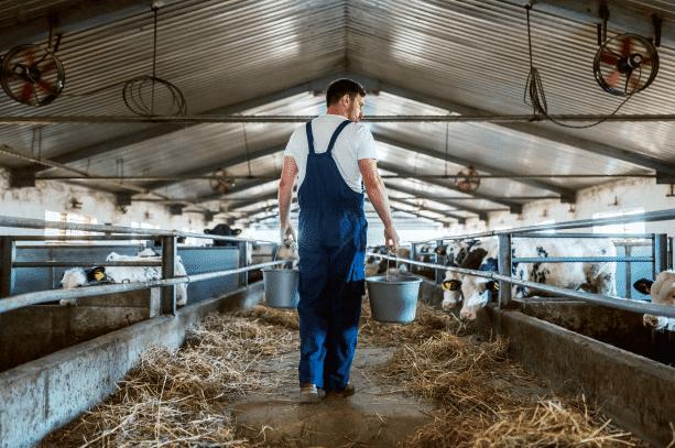 cobertizo para ganado